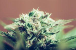 Drugs diversion program